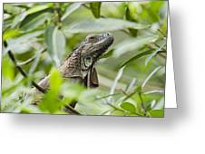 Green Iguana In Lowland Rainforest Greeting Card