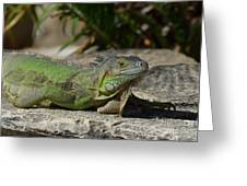 Green Iguana Lizard Greeting Card