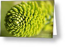 Green Inifinity Greeting Card