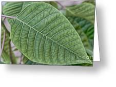 Green Leaf Macro Greeting Card