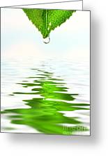Green Leaf Over Water Reflection Greeting Card by Sandra Cunningham
