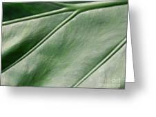 Green Leaf Up Close 2 Greeting Card