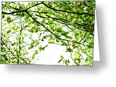 Green Leaves Greeting Card by Blink Images
