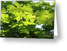 Green Leaves Canvas Greeting Card