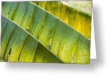 Green Leaves Series 14 Greeting Card