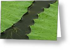 Green Leaves Series  4 Greeting Card