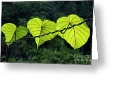 Green Leaves Greeting Card by William Voon