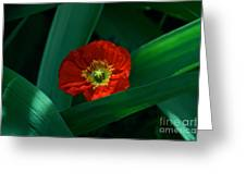 Green Loves Red Loves Green Greeting Card