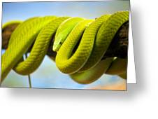 Green Mamba Coiled Up On A Branch Greeting Card