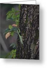 Green Mantis Greeting Card