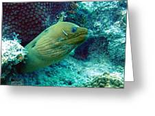 Green Moray Eel With Cleaning Fish Greeting Card