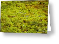 Green Moss Greeting Card