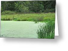 Green Moss Greeting Card
