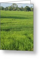 Green Paddy Fields 1 Greeting Card