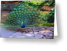 Green Peacock Greeting Card