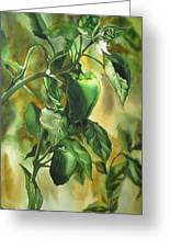 Green Peppers From Our Garden Greeting Card