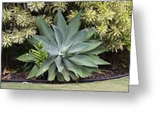 Green Plant Greeting Card