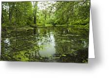 Green Blossoms On Pond Greeting Card