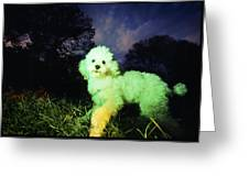 Green Poodle Greeting Card