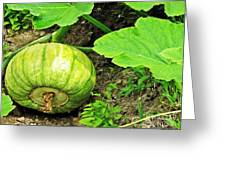 Green Pumpkin Greeting Card