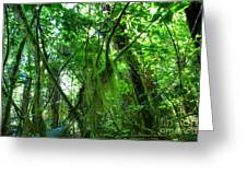 Green Rain Forest Greeting Card
