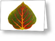 Green Red And Yellow Aspen Leaf 4 Greeting Card