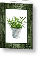 Green Rosemary Herb In Small Pot Greeting Card