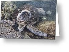 Green Sea Turtle Hawaii Greeting Card
