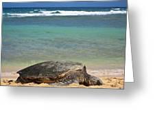 Green Sea Turtle - Kauai Greeting Card