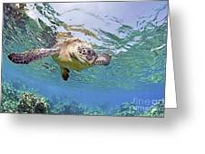 Green Sea Turtle Greeting Card