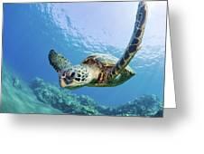 Green Sea Turtle - Maui Greeting Card