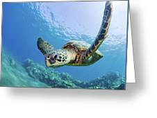 Green Sea Turtle - Maui Greeting Card