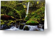 Green Seasons Greeting Card