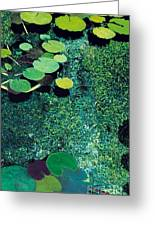 Green Shimmering Pond Greeting Card