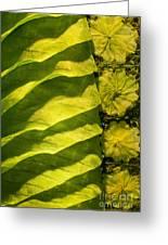 Green Silk 02 Greeting Card