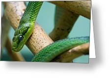 Green Snake Greeting Card