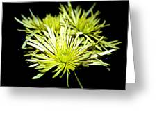 Green Spider Mums Greeting Card