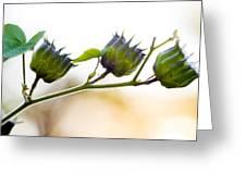 Green Spiky Wild Flowers Greeting Card