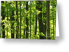 Green Spring Forest Greeting Card
