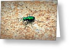 Green Tiger Beetle Greeting Card