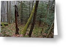 Green Timber Greeting Card