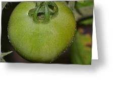 Green Tomato Greeting Card by Michael Sokalski