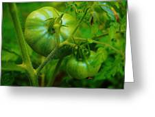 Green Tomatos Greeting Card