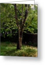 Green Tree In Park Greeting Card
