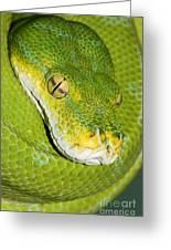 Green Tree Python #2 Greeting Card
