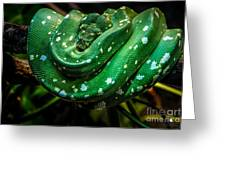 Green Tree Python Greeting Card