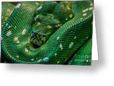 green tree python Macro Greeting Card