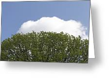 Green Tree Stands Out Against The Blue Sky Greeting Card