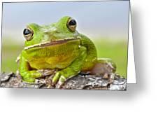 Green Treefrog Greeting Card