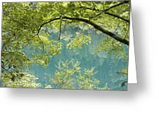 Green Trees Over Blue Water Greeting Card